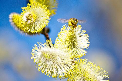 симптомы весенней аллергии у взрослых